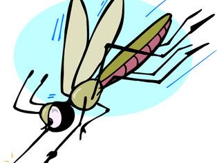 Thumb mosquito